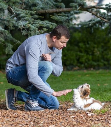Video Tips de Adiestramiento Canino
