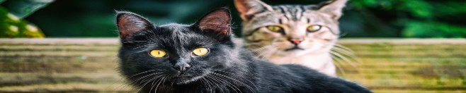 productos para gato