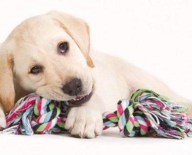 Video ¿Qué aspectos a considerar con un cachorro?