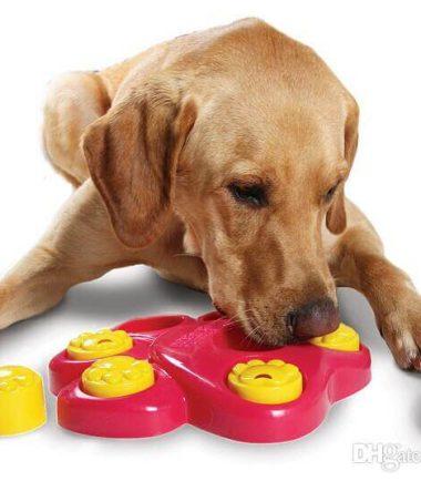 Juego Interactivo + Curso virtual: Beneficios del ejercicio mental para las mascotas