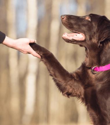 Video Técnicas Manejo Canino en Paseos