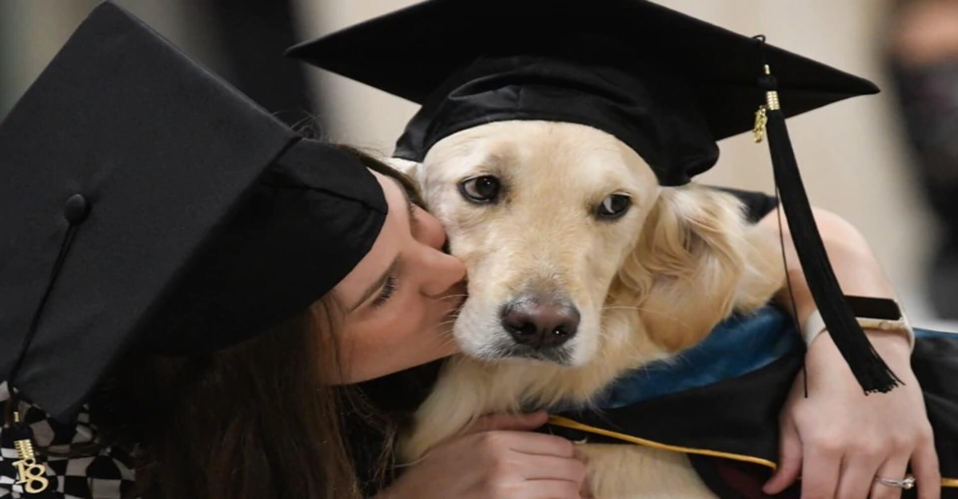 educación canina virtual
