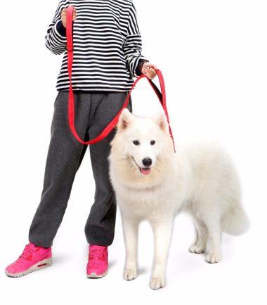 Video ¿Cómo brindar un paseo beneficioso para la mascota?