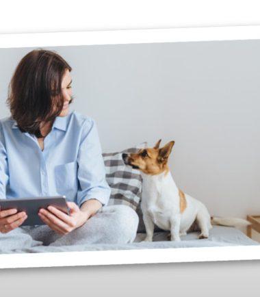 Curso ¿Cómo brindar un paseo beneficioso a las mascotas?