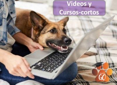 educación virtual canina